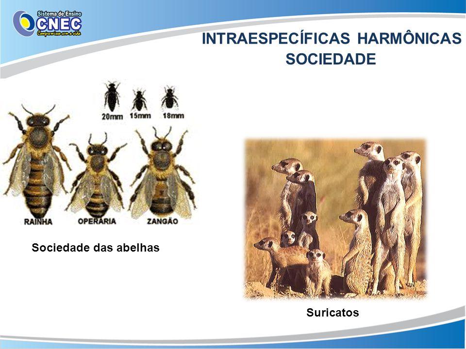 INTRAESPECÍFICAS HARMÔNICAS
