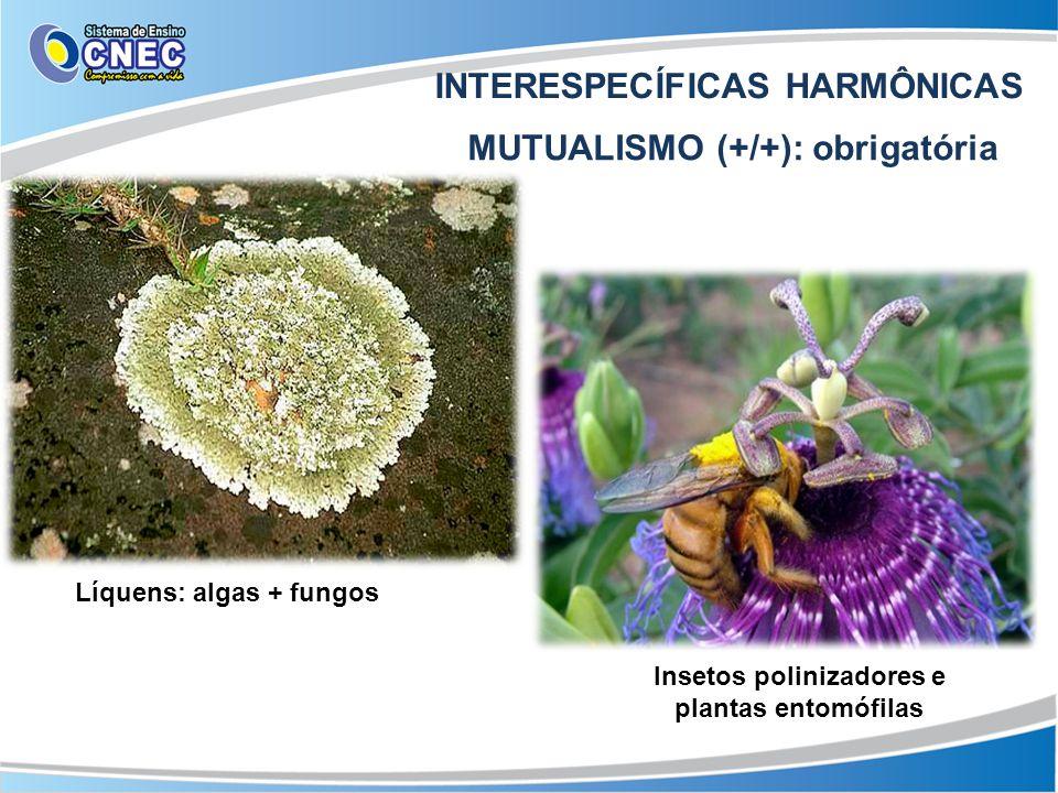 INTERESPECÍFICAS HARMÔNICAS MUTUALISMO (+/+): obrigatória