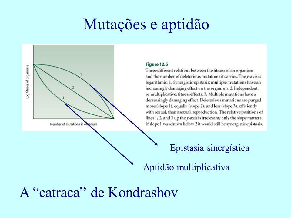 Mutações e aptidão A catraca de Kondrashov Epistasia sinergística