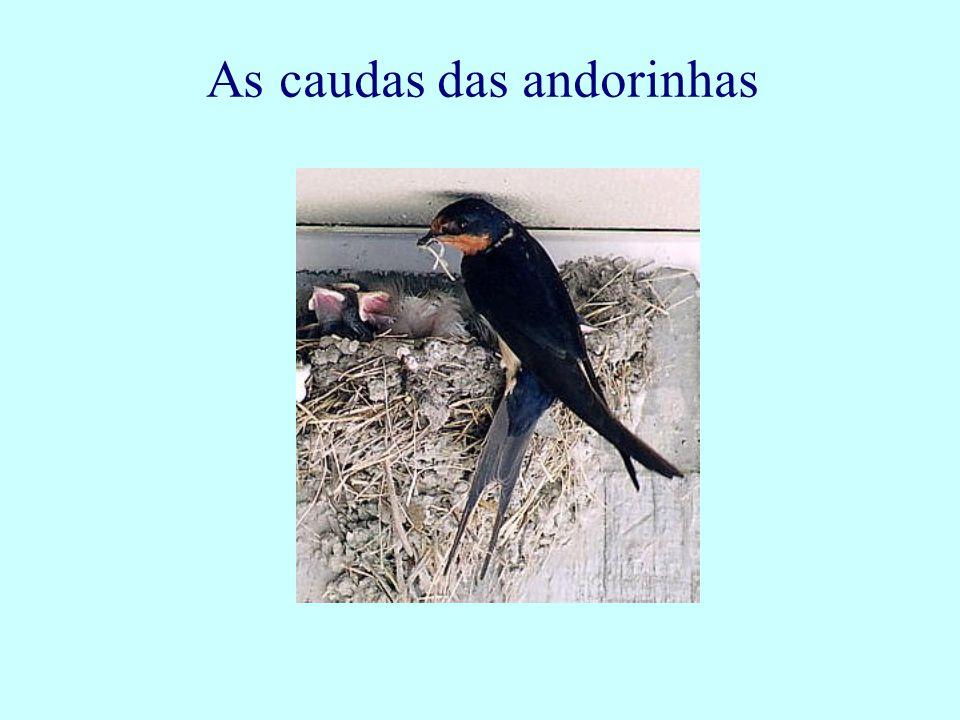 As caudas das andorinhas