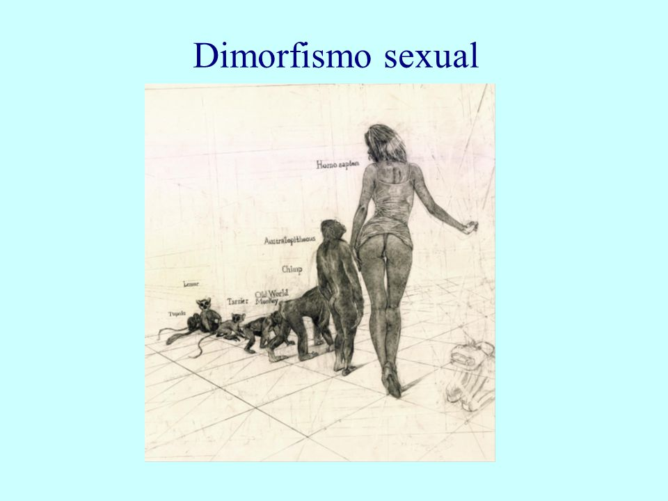 Dimorfismo sexual