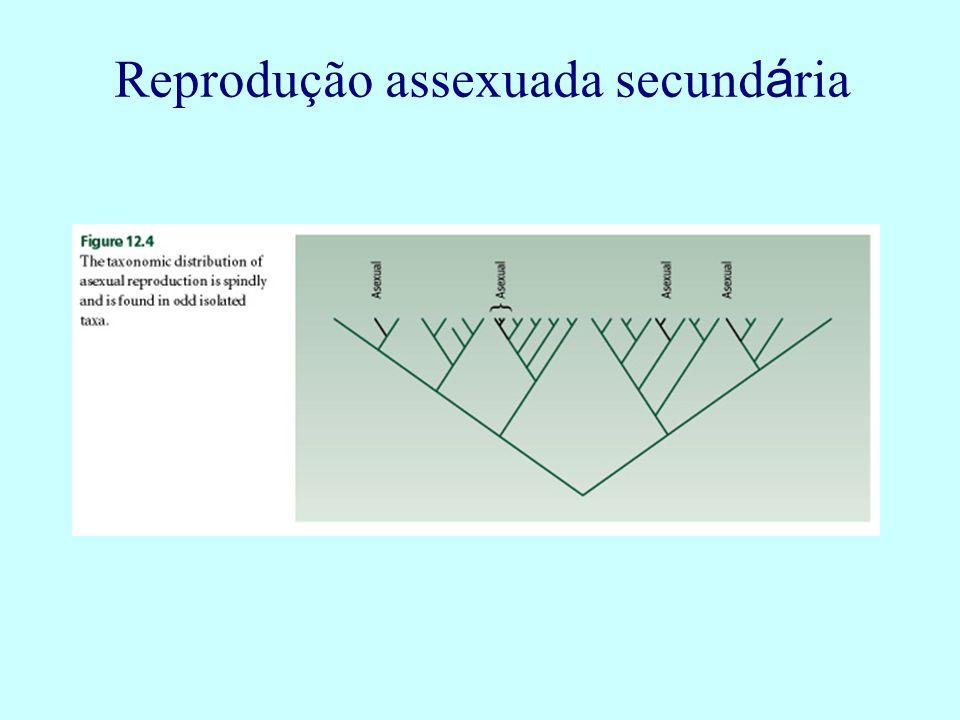 Reprodução assexuada secundária