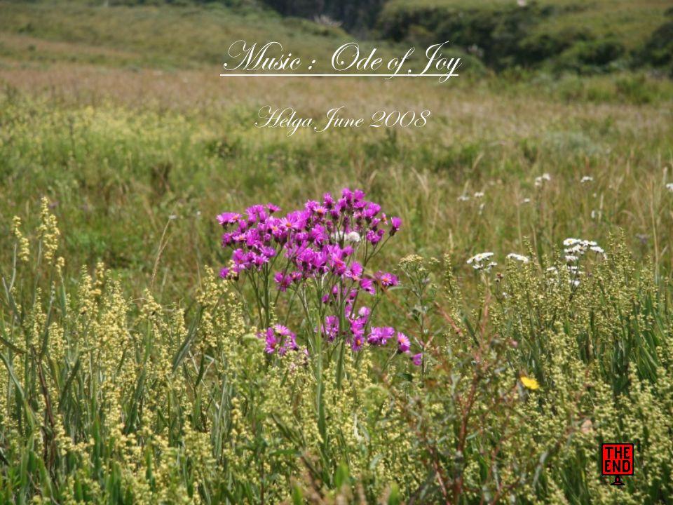 Music : Ode of Joy Helga June 2008