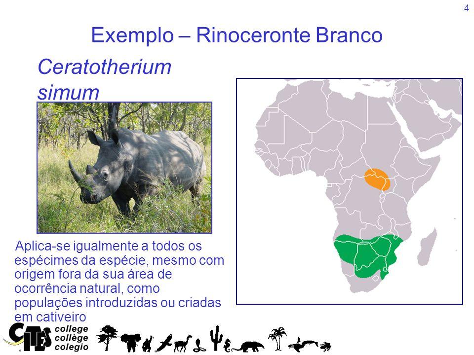 Exemplo – Rinoceronte Branco