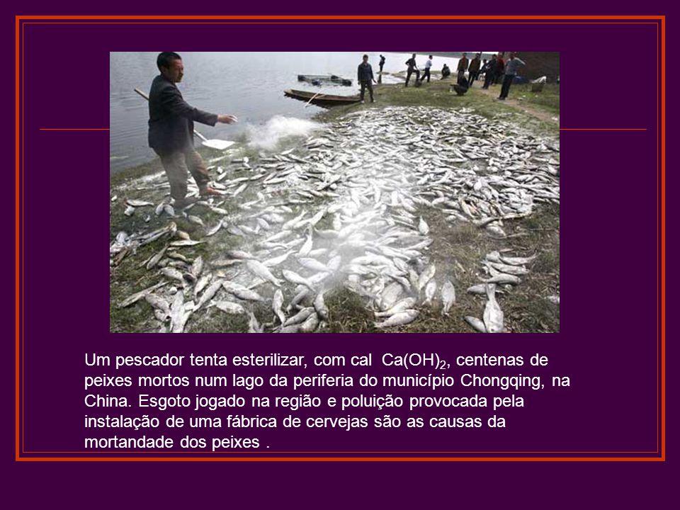 Um pescador tenta esterilizar, com cal Ca(OH)2, centenas de peixes mortos num lago da periferia do município Chongqing, na China.