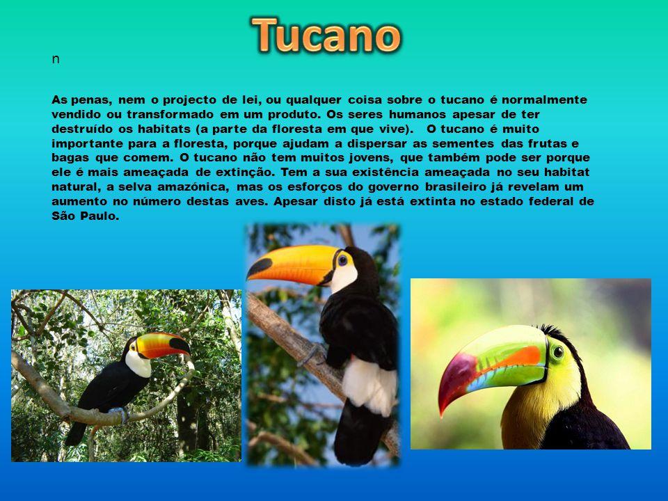 Tucano n.
