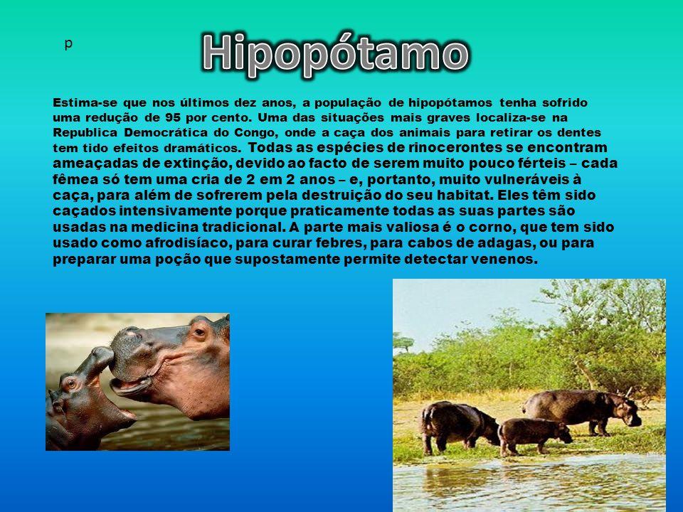 Hipopótamo p.