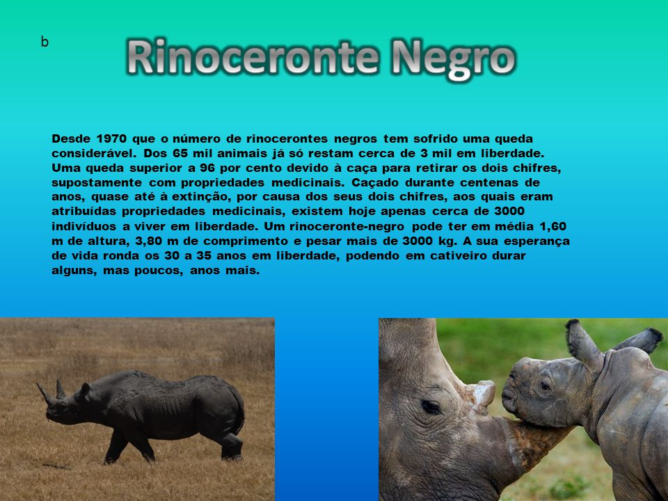 Rinoceronte Negro b.