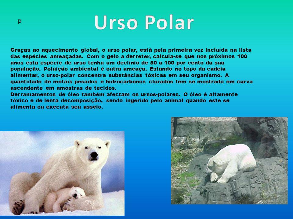 Urso Polar p.