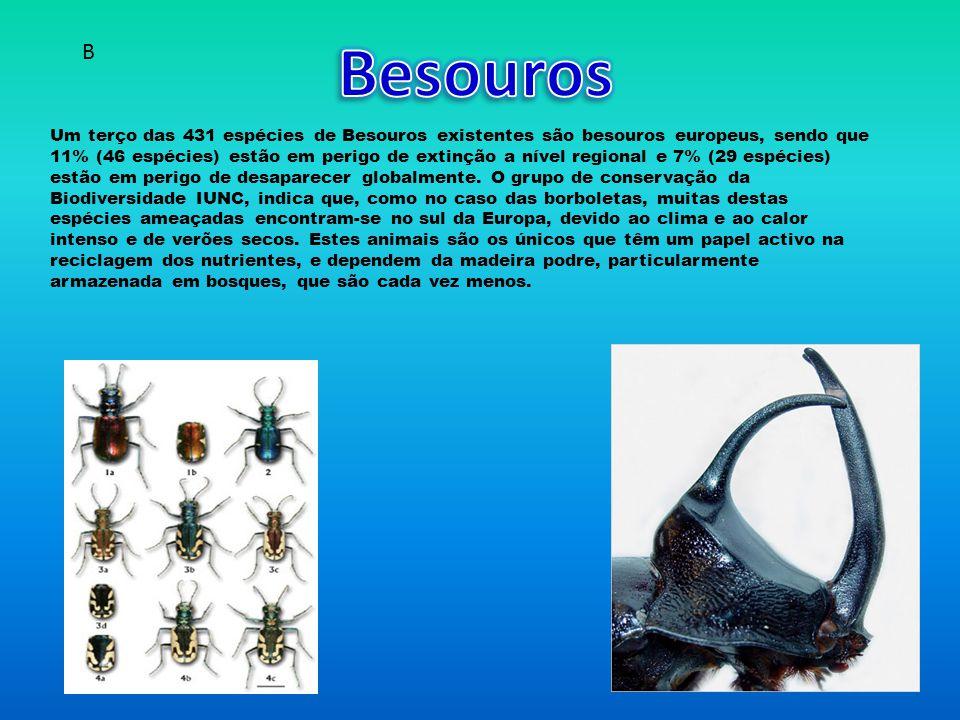 Besouros B.
