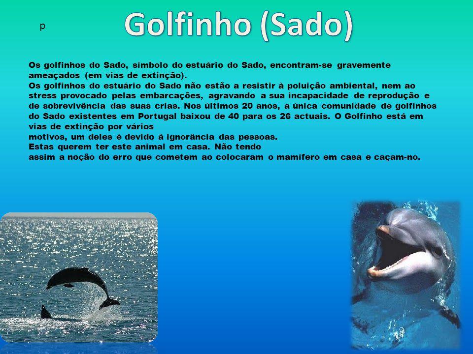 Golfinho (Sado) p.