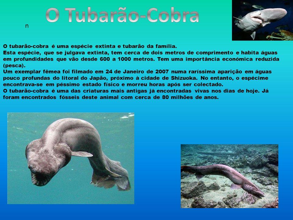 O Tubarão-Cobra n.