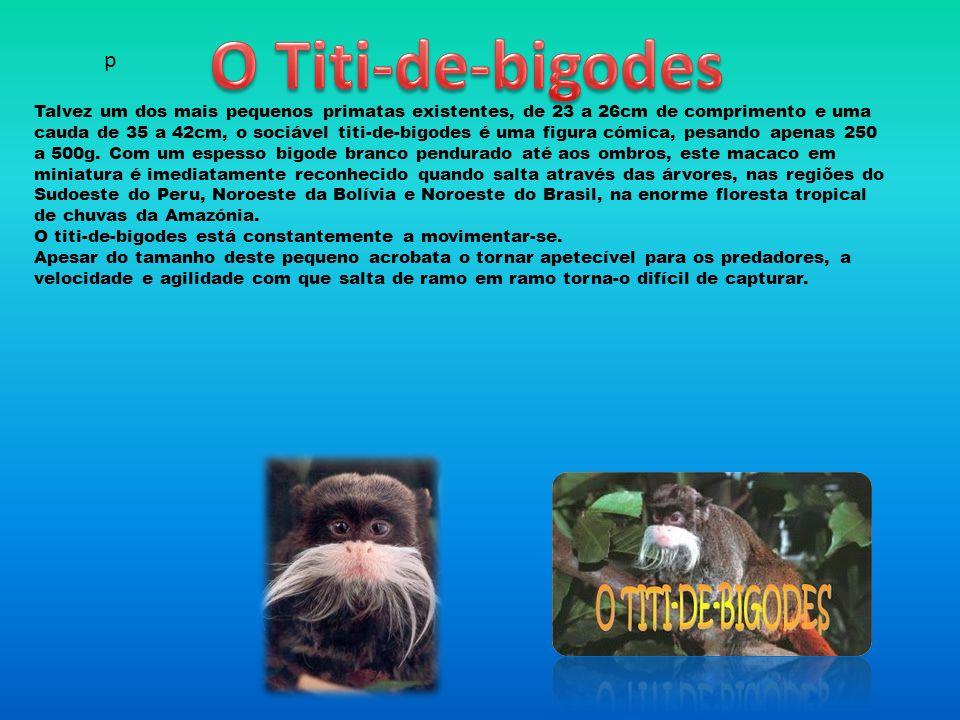 O Titi-de-bigodes p.