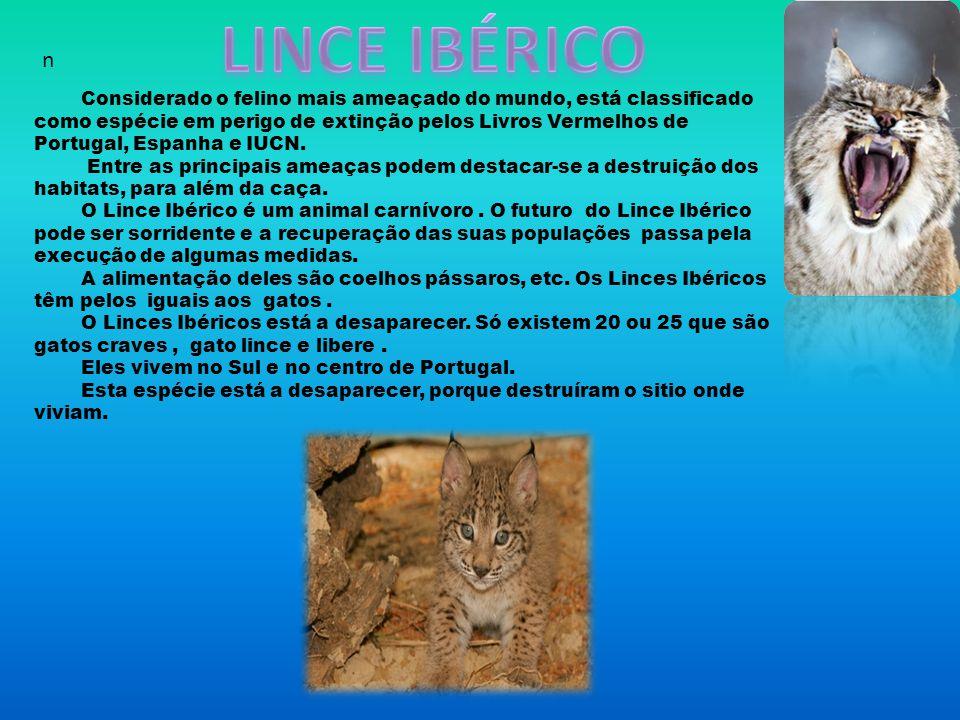 LINCE IBÉRICO n.
