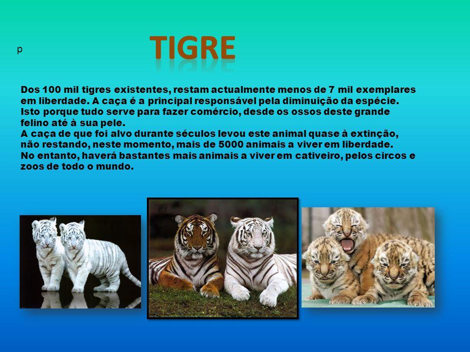 Tigre p.