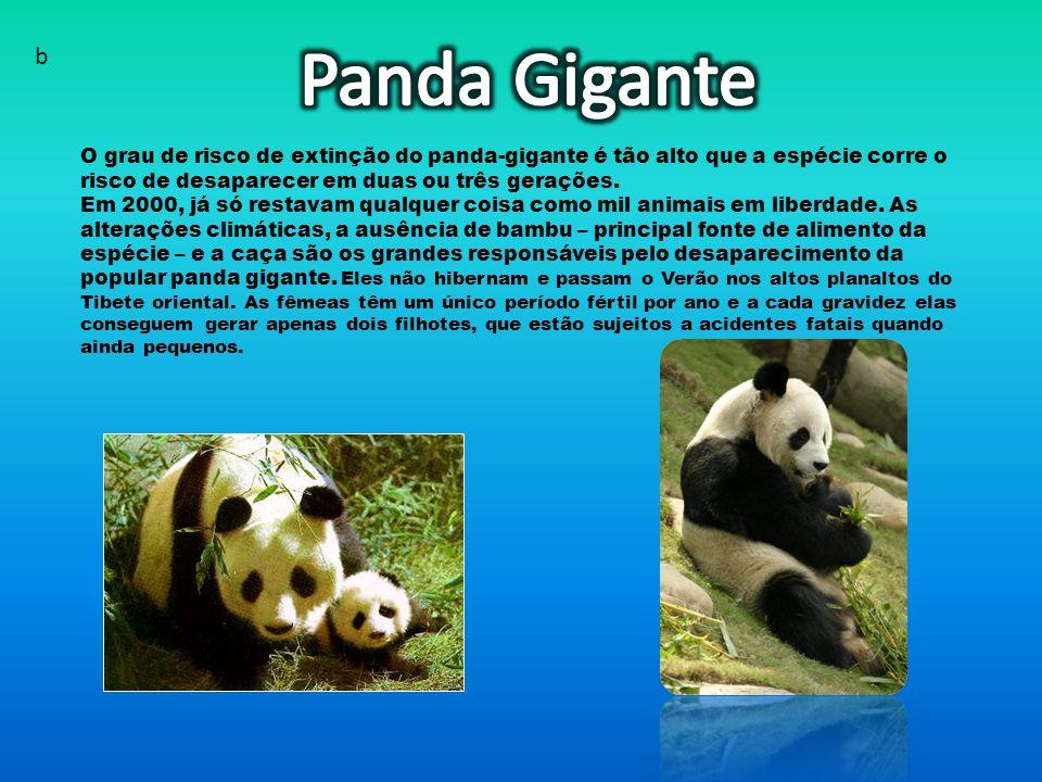 Panda Gigante b. O grau de risco de extinção do panda-gigante é tão alto que a espécie corre o risco de desaparecer em duas ou três gerações.
