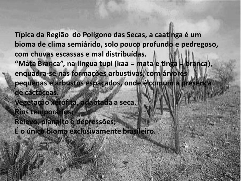 Típica da Região do Polígono das Secas, a caatinga é um bioma de clima semiárido, solo pouco profundo e pedregoso, com chuvas escassas e mal distribuídas.