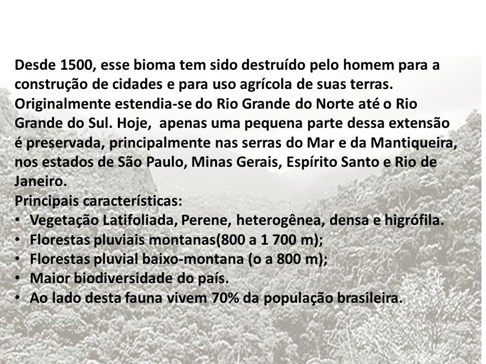 Desde 1500, esse bioma tem sido destruído pelo homem para a construção de cidades e para uso agrícola de suas terras.