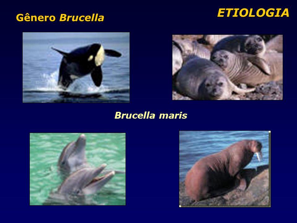 ETIOLOGIA Gênero Brucella Brucella maris