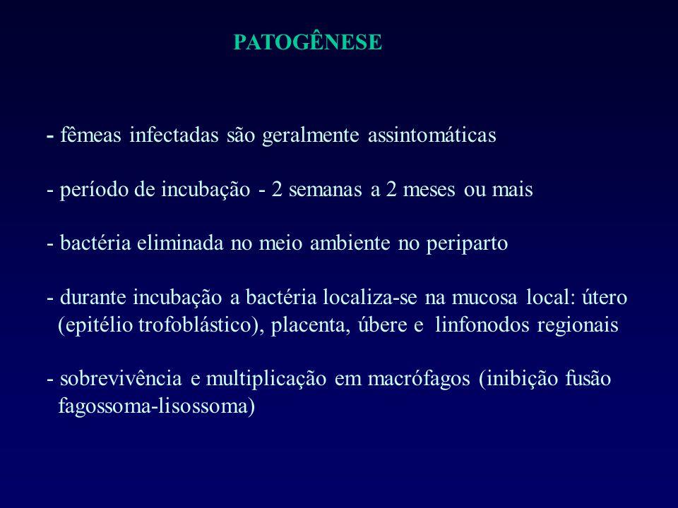 PATOGÊNESE - fêmeas infectadas são geralmente assintomáticas