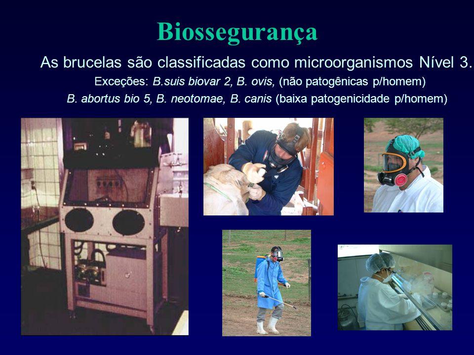 Biossegurança As brucelas são classificadas como microorganismos Nível 3. Exceções: B.suis biovar 2, B. ovis, (não patogênicas p/homem)