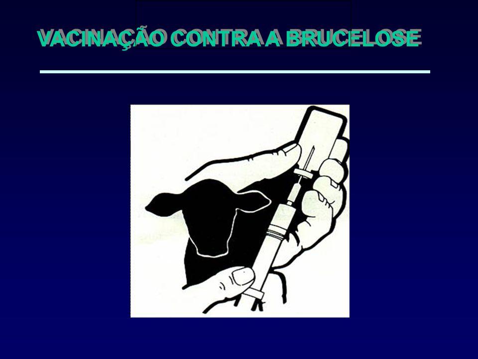 VACINAÇÃO CONTRA A BRUCELOSE