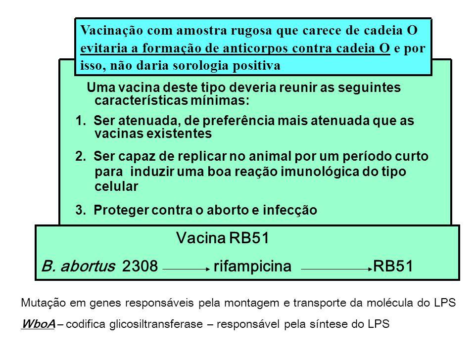B. abortus 2308 rifampicina RB51
