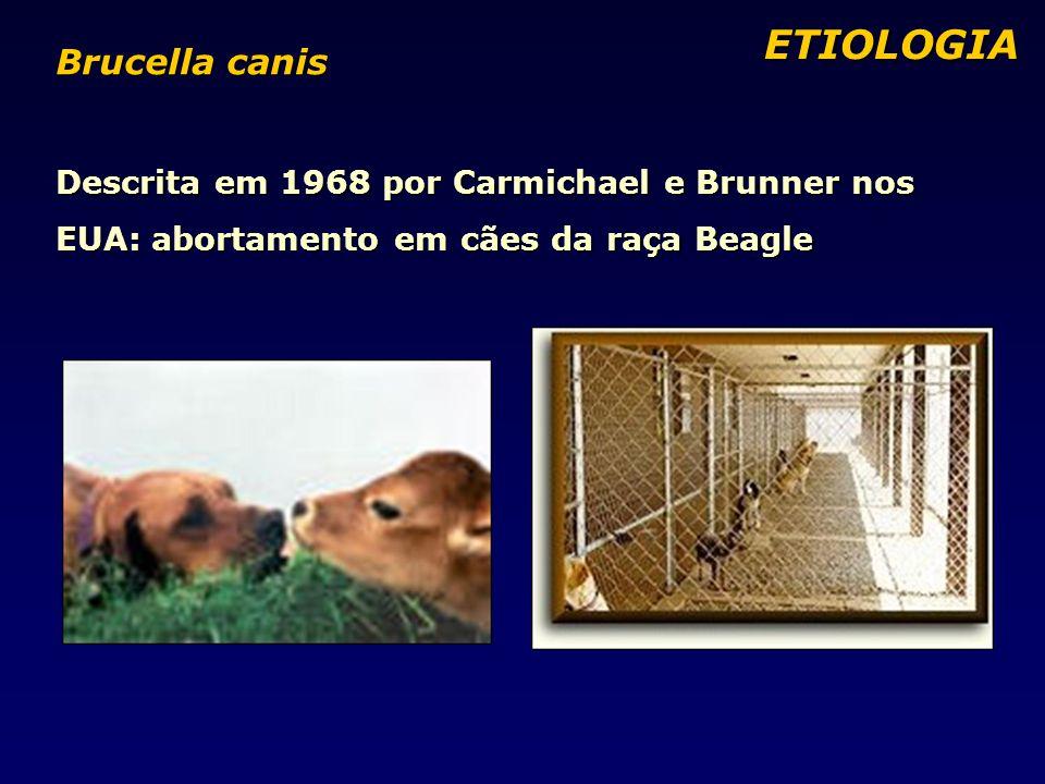 ETIOLOGIA Brucella canis Descrita em 1968 por Carmichael e Brunner nos