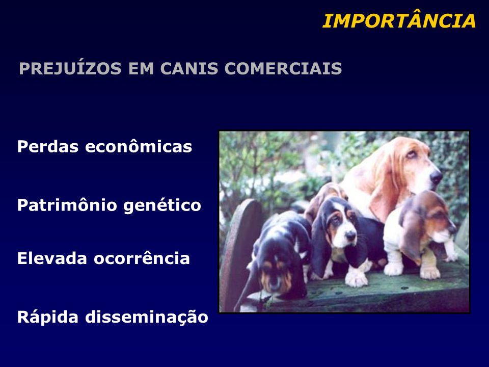 IMPORTÂNCIA PREJUÍZOS EM CANIS COMERCIAIS Perdas econômicas