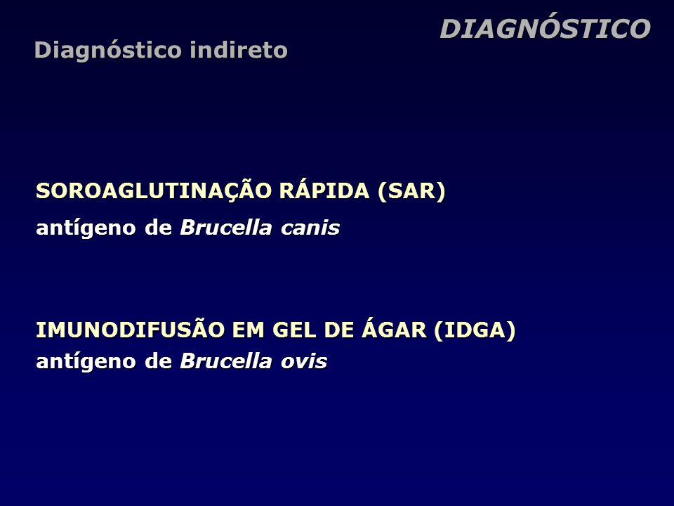 DIAGNÓSTICO Diagnóstico indireto SOROAGLUTINAÇÃO RÁPIDA (SAR)