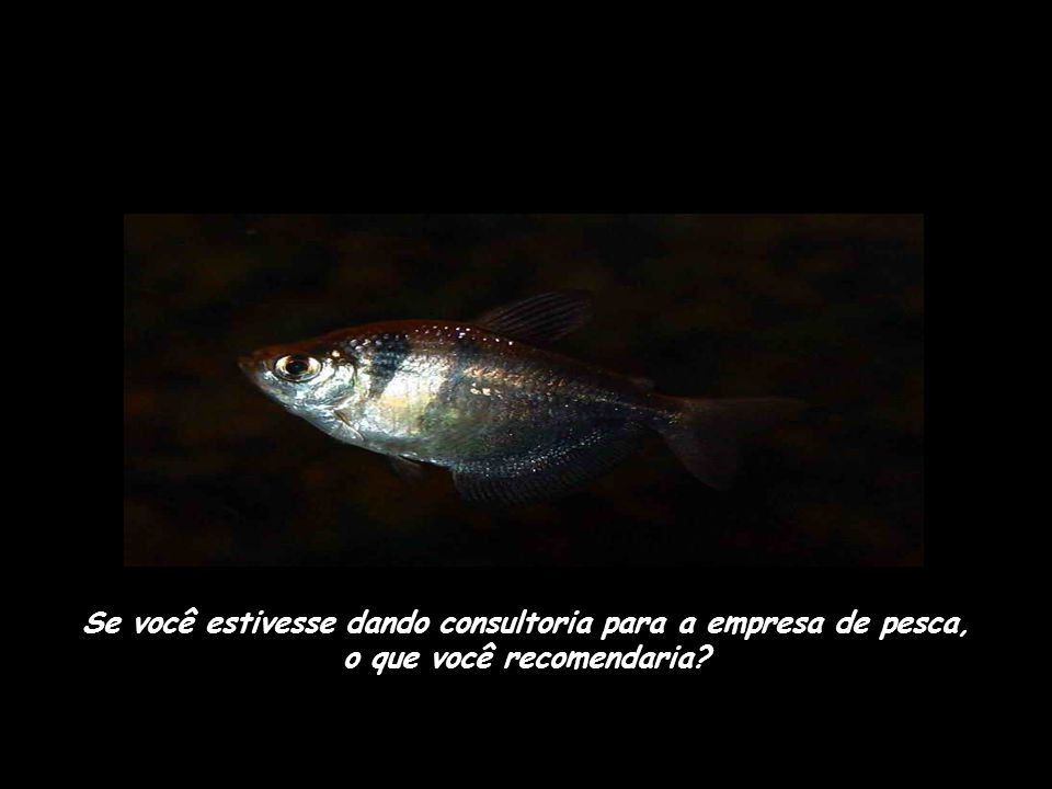 Se você estivesse dando consultoria para a empresa de pesca, o que você recomendaria