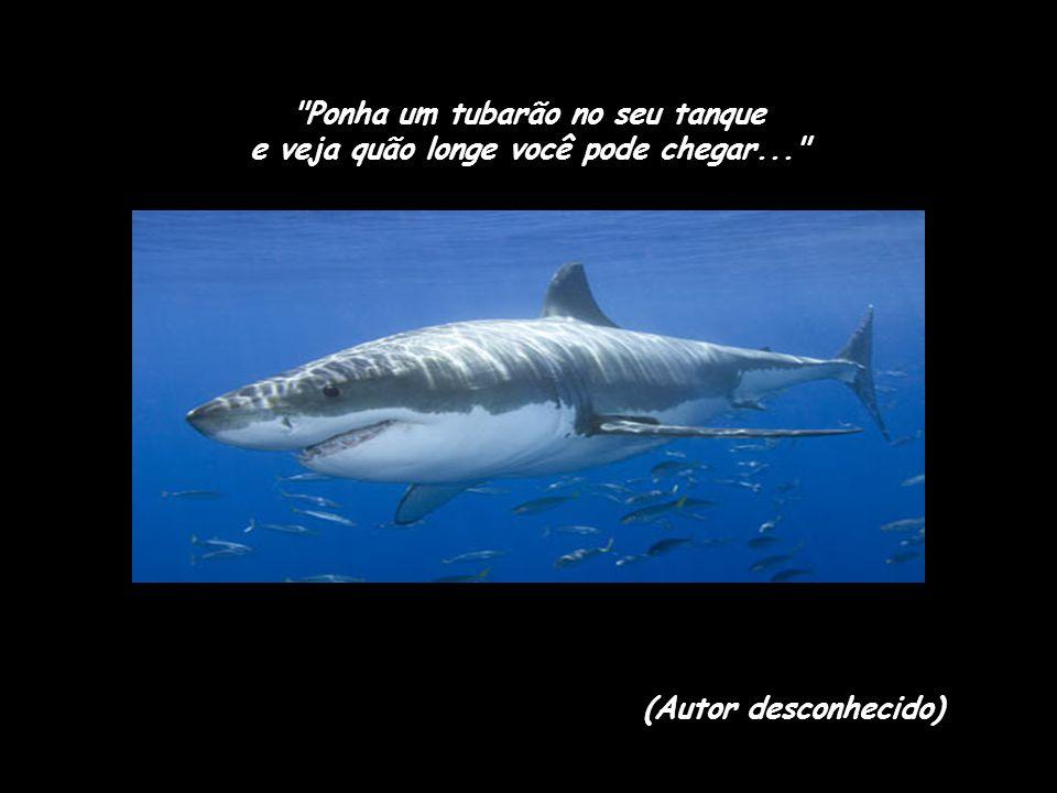 Ponha um tubarão no seu tanque e veja quão longe você pode chegar...