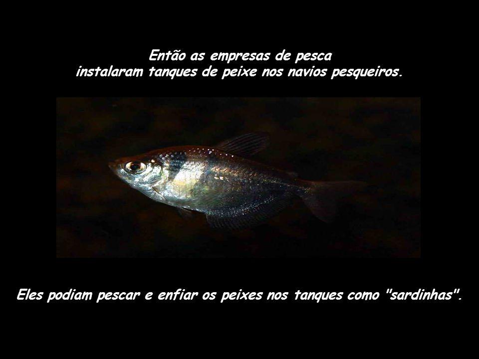 Eles podiam pescar e enfiar os peixes nos tanques como sardinhas .