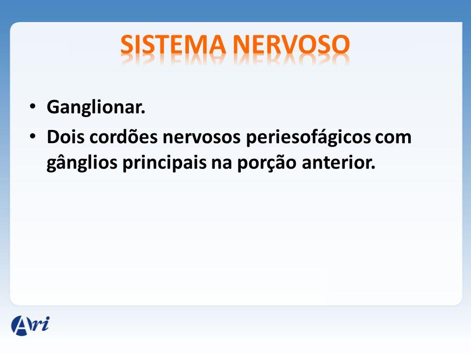 Sistema nervoso Ganglionar.