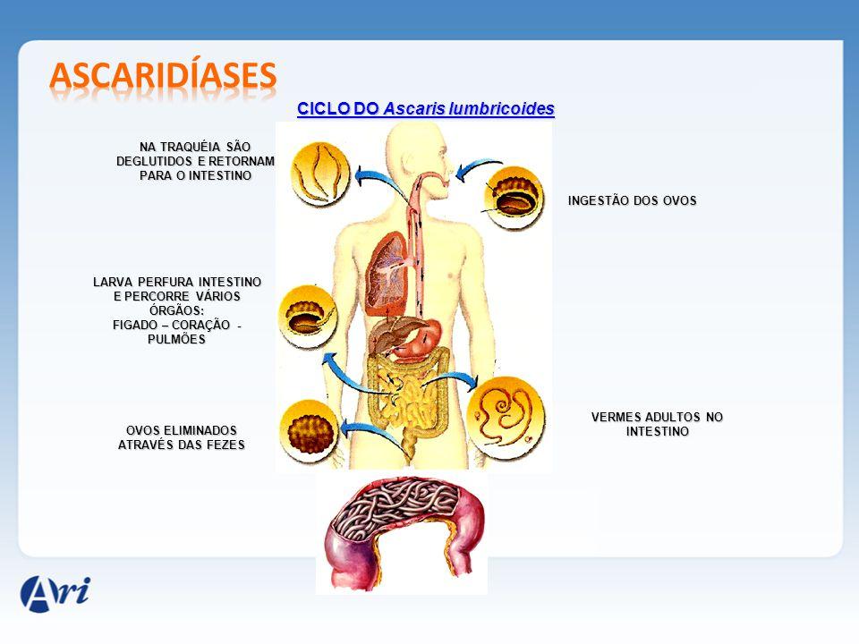 ascaridíases CICLO DO Ascaris lumbricoides