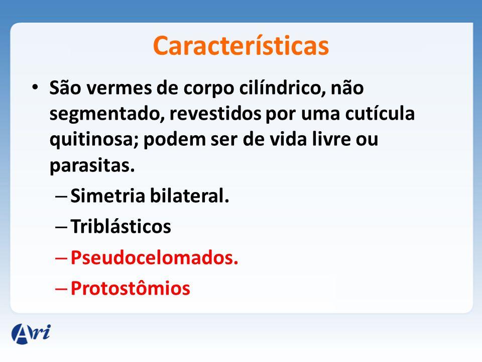 Características São vermes de corpo cilíndrico, não segmentado, revestidos por uma cutícula quitinosa; podem ser de vida livre ou parasitas.