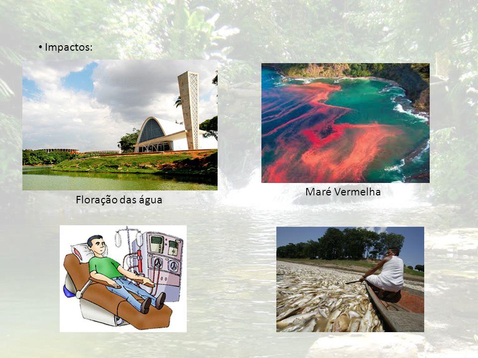 Impactos: Maré Vermelha Floração das água