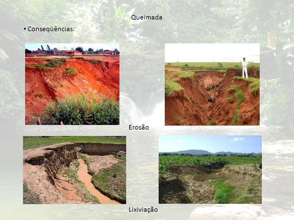 Queimada Conseqüências: Erosão Lixiviação
