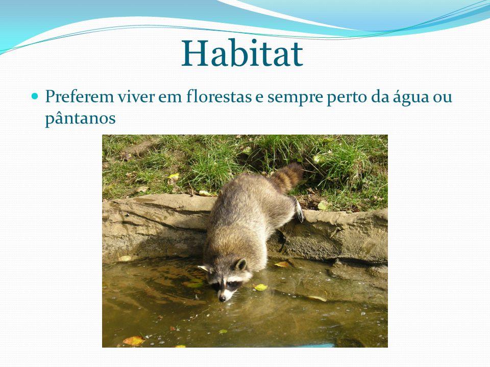 Habitat Preferem viver em florestas e sempre perto da água ou pântanos