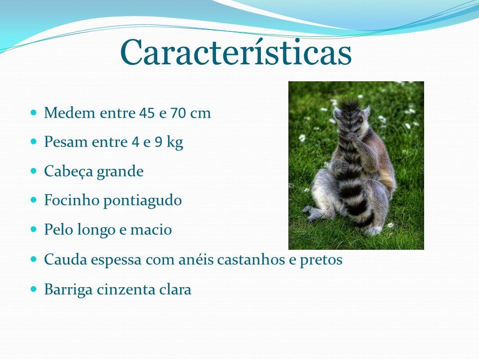 Características Medem entre 45 e 70 cm Pesam entre 4 e 9 kg