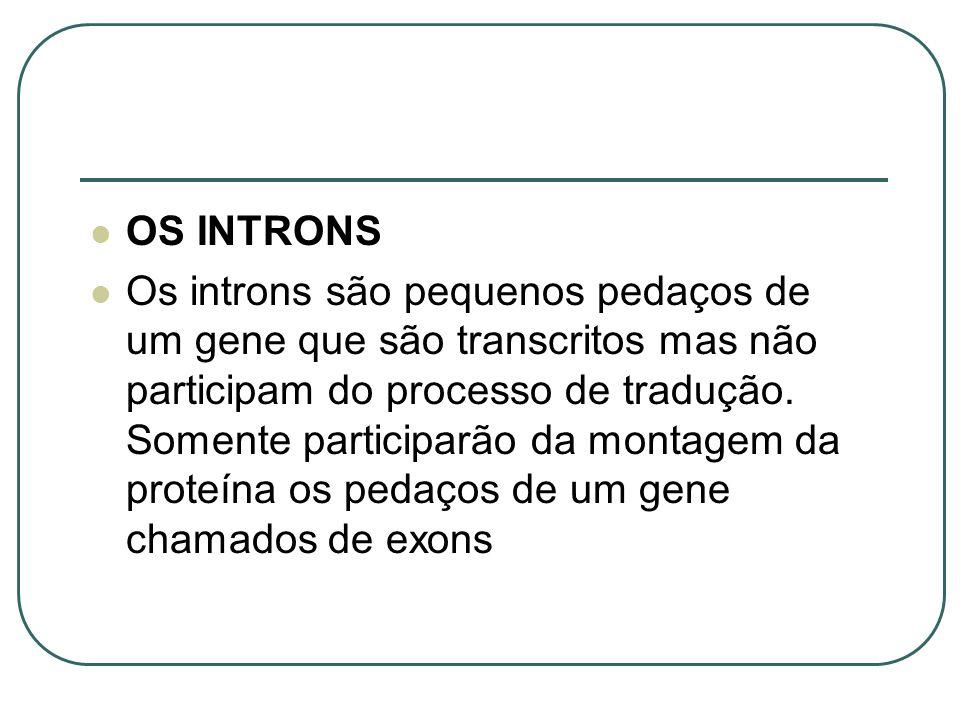 OS INTRONS