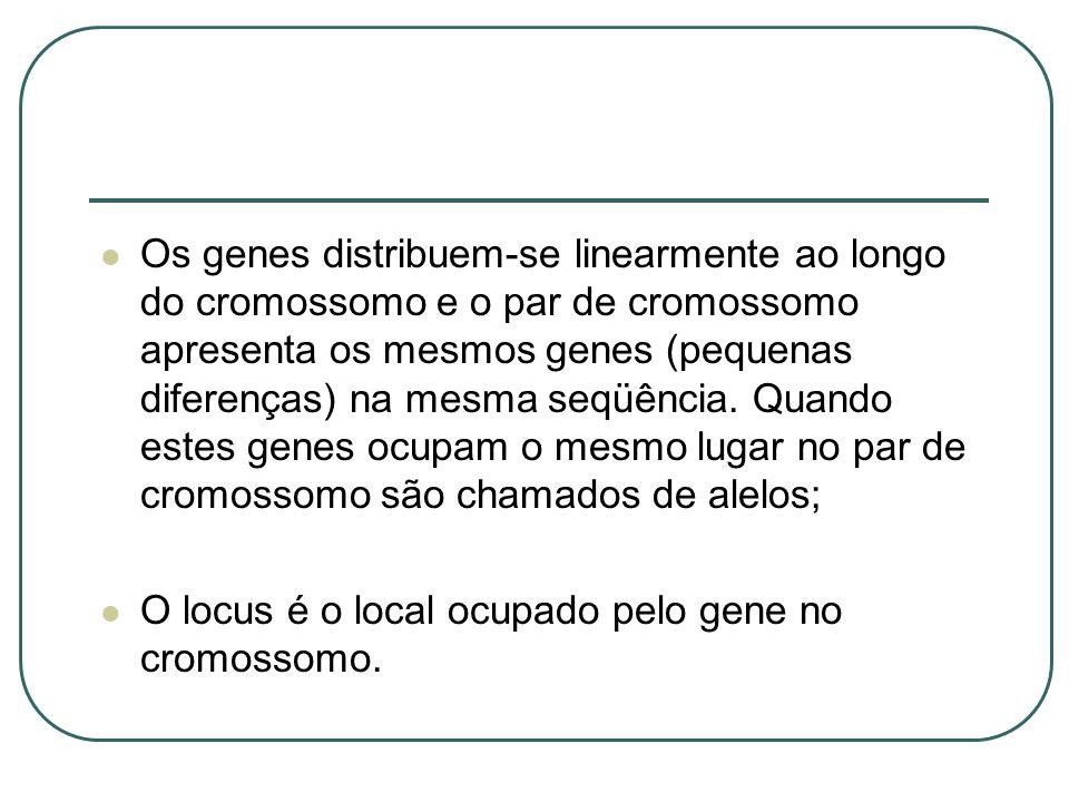 Os genes distribuem-se linearmente ao longo do cromossomo e o par de cromossomo apresenta os mesmos genes (pequenas diferenças) na mesma seqüência. Quando estes genes ocupam o mesmo lugar no par de cromossomo são chamados de alelos;