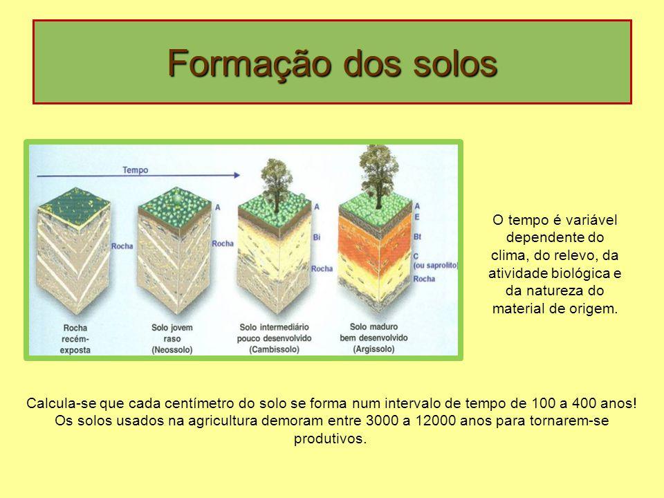 Formação dos solos O tempo é variável dependente do clima, do relevo, da atividade biológica e da natureza do material de origem.