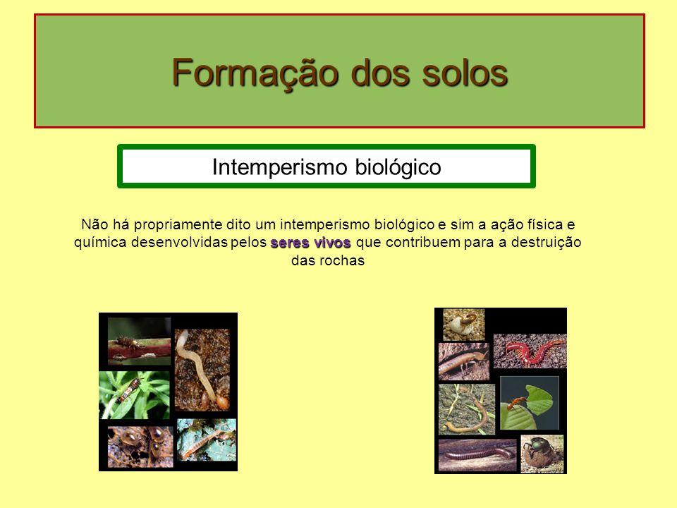 Intemperismo biológico