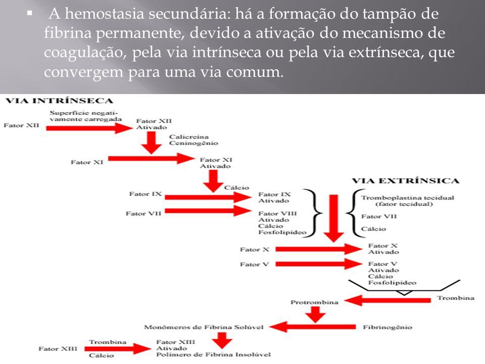 A hemostasia secundária: há a formação do tampão de fibrina permanente, devido a ativação do mecanismo de coagulação, pela via intrínseca ou pela via extrínseca, que convergem para uma via comum.