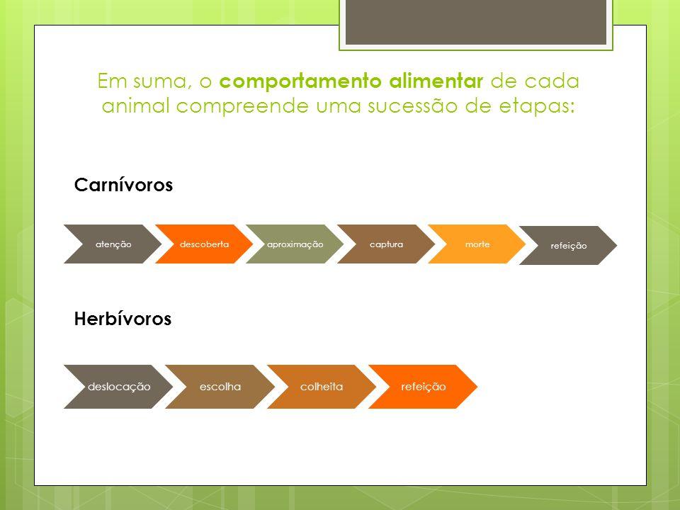 Em suma, o comportamento alimentar de cada animal compreende uma sucessão de etapas: