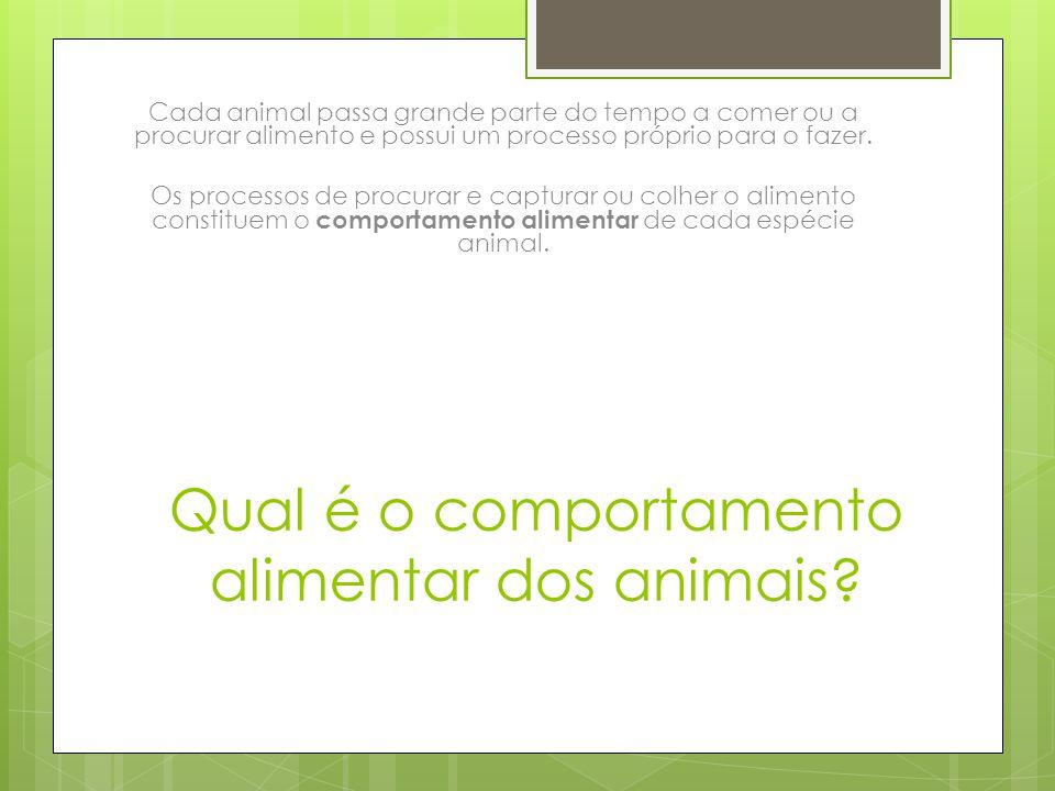 Qual é o comportamento alimentar dos animais
