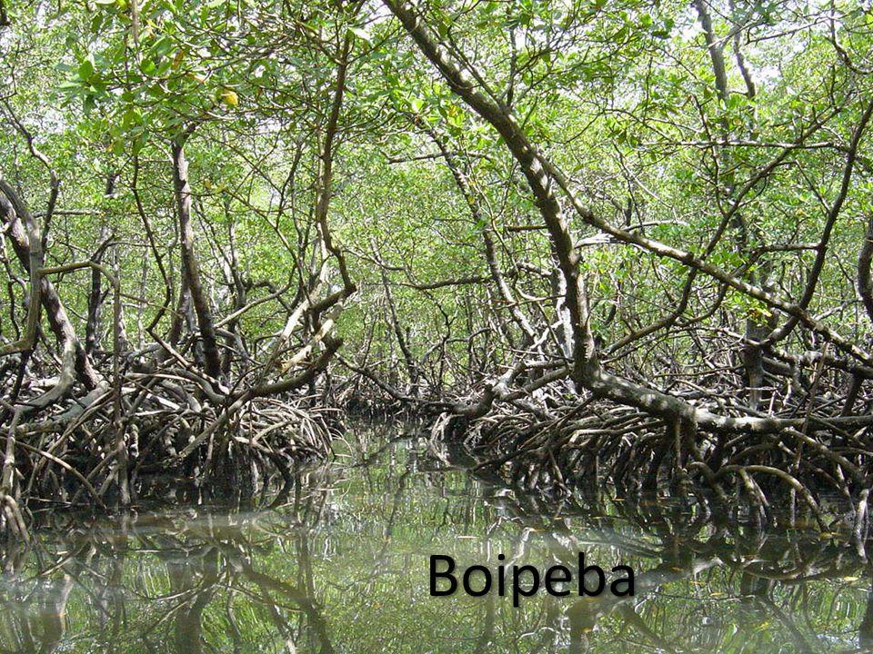 Boipeba