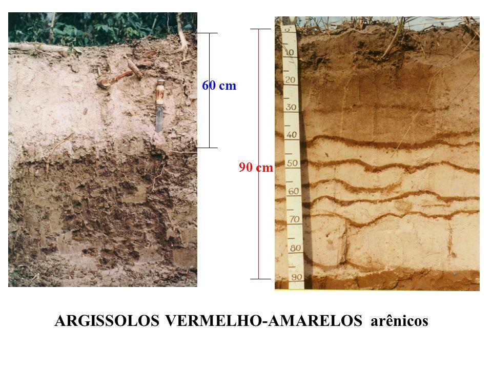 ARGISSOLOS VERMELHO-AMARELOS arênicos