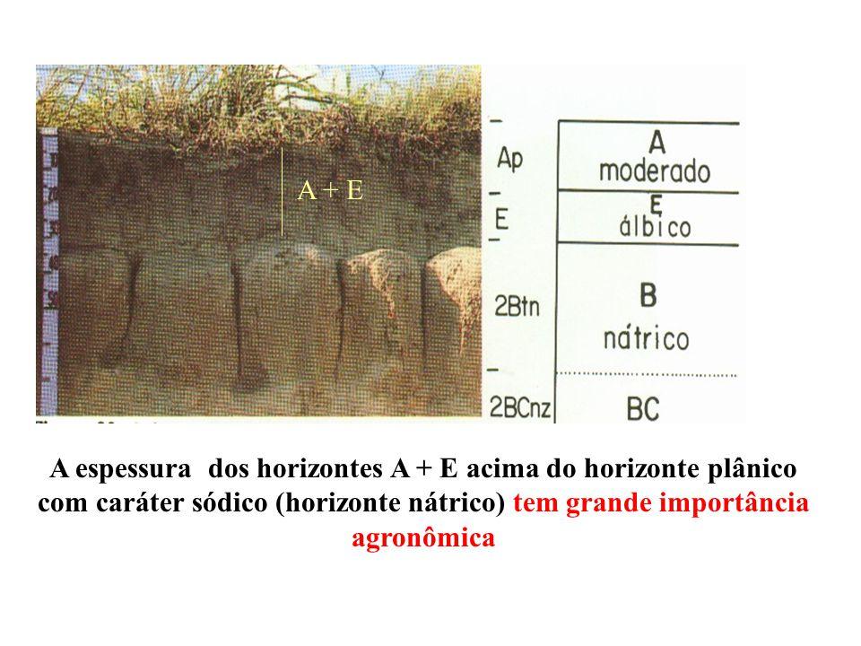 A + E A espessura dos horizontes A + E acima do horizonte plânico com caráter sódico (horizonte nátrico) tem grande importância agronômica.